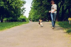 Girl running with her cute female beagle dog in the park at summer time. Lifestyle photo. royalty free stock photography