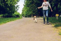 Girl running with her cute female beagle dog in the park at summer time. Lifestyle photo. stock photography