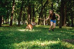 Girl running in the park with her dog and a stick. Blonde girl running in the park with her muscular dog and a stick royalty free stock photography