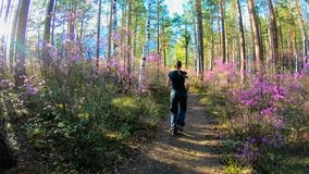 Girl runs along a forest path in sunny day, among the trees and pink flowers. Of rhododendron, and between the woods the sun shines. Walking in the forest stock video