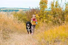 girl runs around with big dog on autumn hills of race royalty free stock images