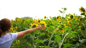 The girl runs in a field of sunflowers. Slowmotion stock footage