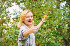 Girl rustic style gather apples harvest garden autumn day. Farmer picking ripe fruit from tree. Harvesting season. Concept. Woman hold apple garden background stock photography