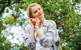 Girl rustic style gather harvest garden autumn day. Farmer pretty blonde with appetite red apple. Harvesting season. Concept. Woman hold apple garden background stock photos