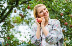 Girl rustic style gather harvest garden autumn day. Farmer pretty blonde with appetite red apple. Local crops concept. Woman hold apple garden background. Farm stock images