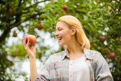 Girl rustic style gather harvest garden autumn day. Farmer pretty blonde with appetite red apple. Woman hold apple. Garden background. Farm produce organic stock photography