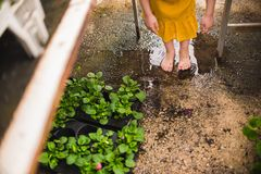 Girl`s bare feet in a puddle stock photos