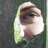 Girl's green eye in mossy knothole Stock Photography