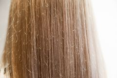 Girl`s hair vertically from back painted, close up long straight blonde female hair stock images