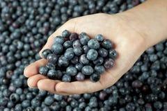 Girl's Hand Holding Fresh Picked Blueberries Stock Photos