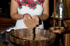 The girl`s hand pours a handful of wheat grain. In a wooden barrel Stock Images