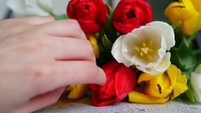 The girl`s hand touches a colorful bouquet of tulips close up in a slow motion. Slow motion stock footage