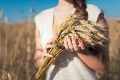 Girl's hands with ears of wheat Stock Photo