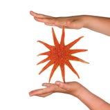 Girl S Hands Holding Starfish