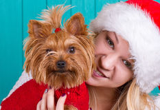 Girl in santa cap with yorkie dog in red sweater Royalty Free Stock Photography