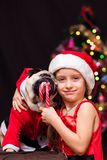 A girl in Santa Claus costume gives a pug to lick a candy cane n. Ear the tree Stock Image