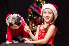 A girl in Santa Claus costume gives a pug to lick a candy cane n. Ear the tree Stock Photos