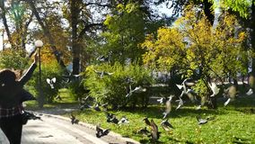Girl Scare and dispersed a  Flock Of Pigeons And They Fly In Different Directions stock video footage