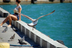 Girl and seagull Royalty Free Stock Image