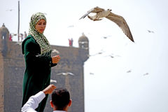 The girl and the seagulls of Essaouira stock photo
