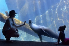 Girl and a seal at the zoo Stock Image