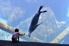 Girl and a seal at the zoo Royalty Free Stock Photo