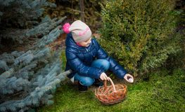 Girl searching for eggs on Easter at yard Stock Image