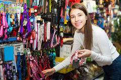Girl selecting collars and leads Stock Image