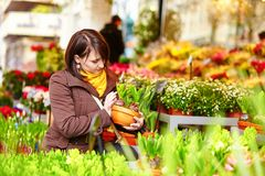 Girl selecting flowers at market Stock Photography