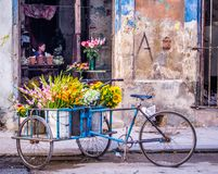 Girl selling flowers in Havana. Girl sitting in a flower shop in a rundown house in Havana Stock Images
