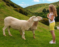 Girl With Sheep Stock Photo