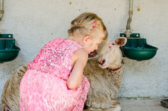 Girl with sheep Stock Photography