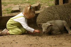 Girl with sheep and lamb. Girl plays with sheep and lamb Royalty Free Stock Photos