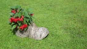 Girl shoe form flower pot stock footage