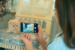 Girl shooting a cat with a camera phone . Stock Image