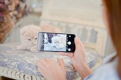 Girl shooting a cat with a camera phone . Stock Photography
