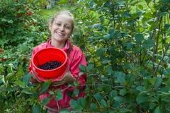 Girl showing berries in a bucket. Girl teenager in red jacket showing chokeberry in red bucket at green garden Stock Photo