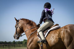 Girl showing chestnut gelding. At an English horse show Stock Image