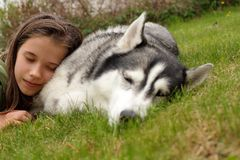 Girl and siberian husky. Girl and her friend, siberian husky Royalty Free Stock Photography