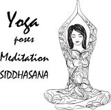 A girl in a siddhasana yoga pose. vector illustration