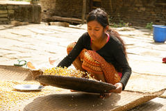 Girl sifts corn. In mountain village, Nepal stock photography
