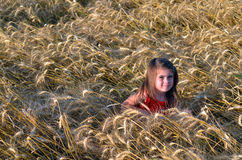 Girl sit in wheat field Stock Photography