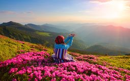 The girl sits on the lawn covered with pink flowers watching at the high mountains, sky with clouds and sun in summer day. Stock Images