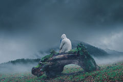 Girl sitting alone. In front of a misty mountain on a branch of a tree Royalty Free Stock Photo