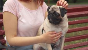 Girl sitting on a bench and stroking her pug stock footage