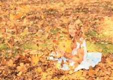 Girl sitting in falling leaves Stock Image