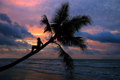 Girl sitting on a palm tree. In sunset Royalty Free Stock Photos