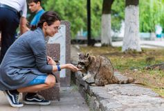 Girl sitting in the park and feeding raccoon stock photos