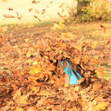 Girl sitting in spate of falling leaves Stock Photography