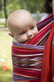 girl six month old sitting in sling. Stock Image